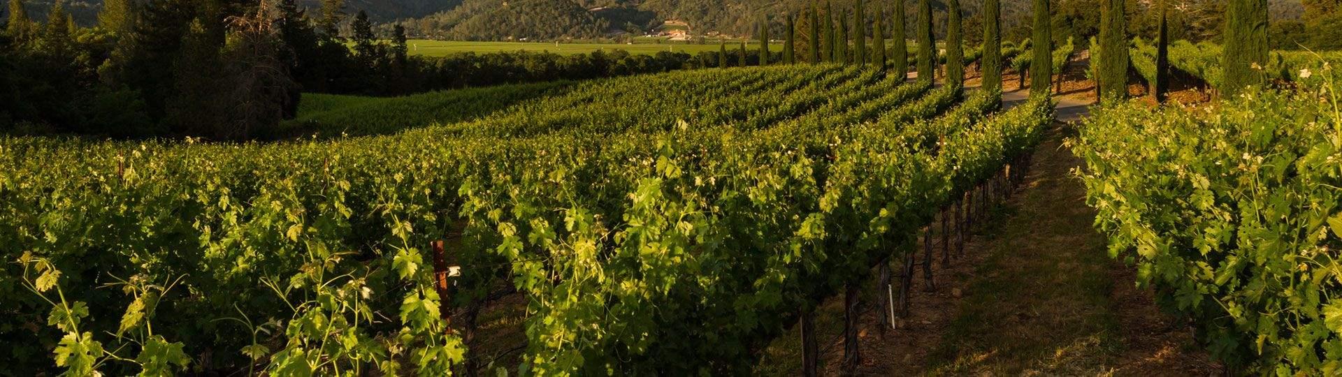 Aurora Park Cottages, Calistoga - Wineries
